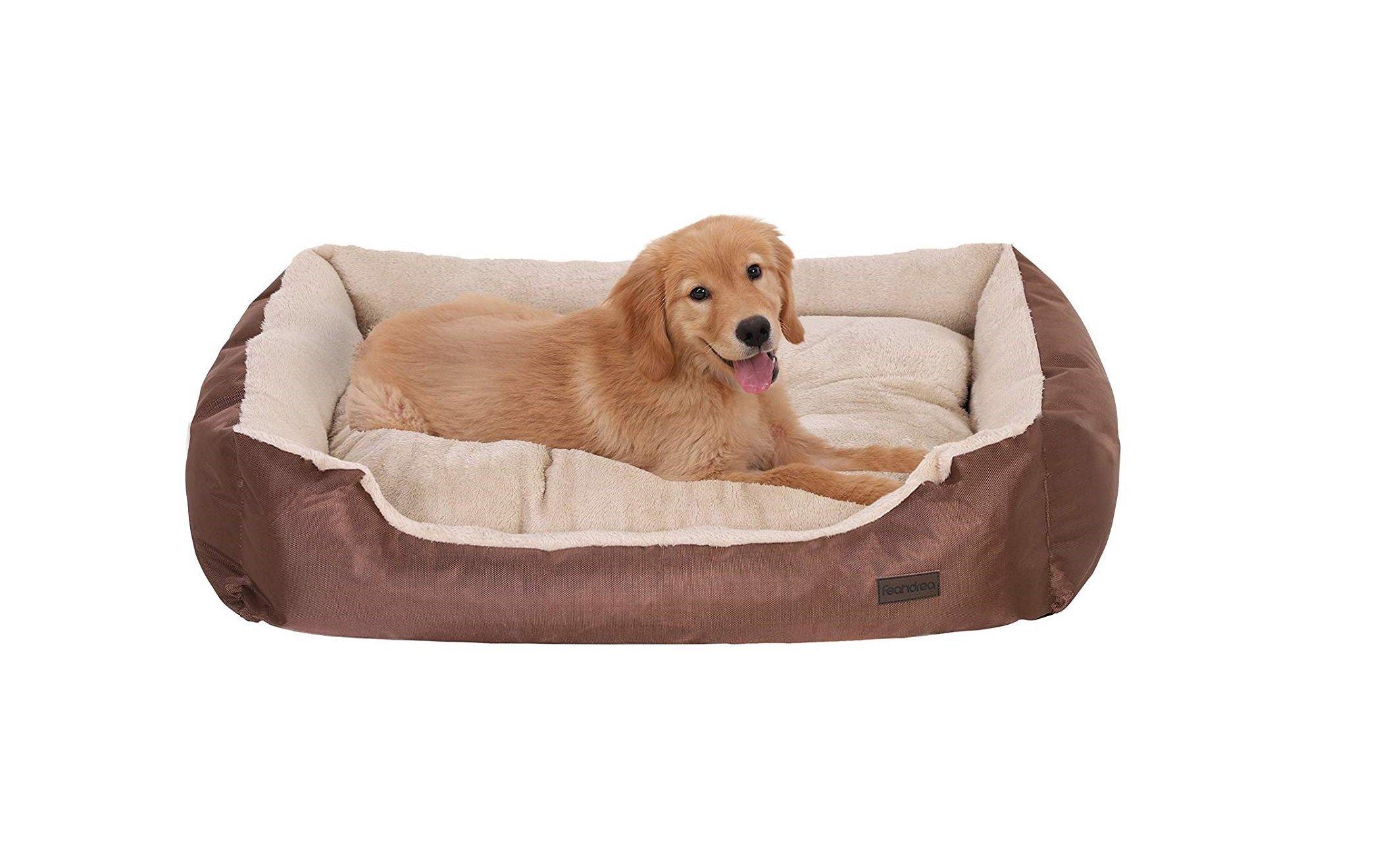 Cucce Design Per Cani migliori cucce e cuscini per cani grandi e piccoli da interno